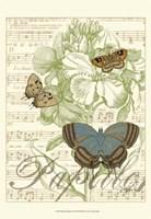 Papillon Melange I Framed Print