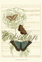 Papillon Melange II Framed Print