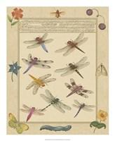 Dragonfly Manuscript III Fine Art Print