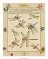Dragonfly Manuscript IV Fine Art Print