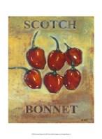 Scotch Bonnet Framed Print