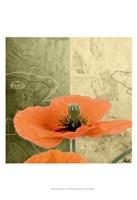 Orange Poppies III Fine Art Print