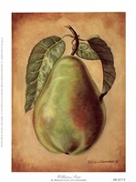 Williams Pear Fine Art Print