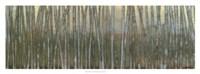 """Blue Birch Forest I by Norman Wyatt Jr. - 36"""" x 12"""""""