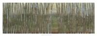"""Blue Birch Forest II by Norman Wyatt Jr. - 36"""" x 12"""""""