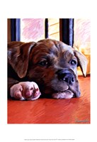 "Kratos Baby Pit Bull by Robert McClintock - 13"" x 19"""