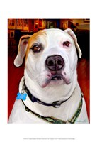 "Sonny American Bulldog by Robert McClintock - 13"" x 19"""