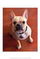 "Sophie French Bulldog by Robert McClintock - 13"" x 19"""