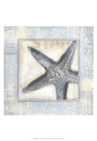 """13"""" x 19"""" Starfish Pictures"""