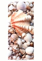 Shell Menagerie I Fine Art Print