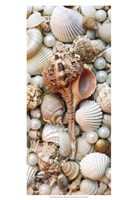 Shell Menagerie III Fine Art Print