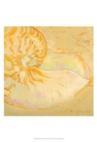 "Shoreline Shells I by Lorraine Vail - 13"" x 19"""