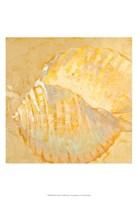 Shoreline Shells IV Fine Art Print