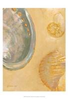 Shoreline Shells V Fine Art Print