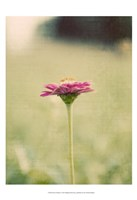 Flower Portrait I Fine Art Print
