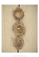 Nesting II Fine Art Print