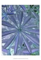 Woodland Plants in Blue I Fine Art Print