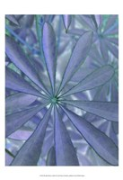 Woodland Plants in Blue II Fine Art Print