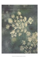 Queen Ann's Lace III Fine Art Print