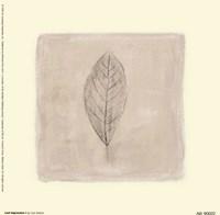 Leaf Impression l Fine Art Print