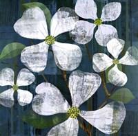 """White Magnolia Square by Maria Carluccio - 27"""" x 27"""""""