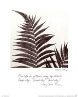 Delicate Ferns Fine Art Print