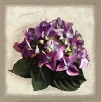 Botanical Hydrenga Fine Art Print
