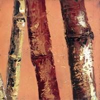 """Bamboo Columbia II by Tita Quintero - 12"""" x 12"""""""