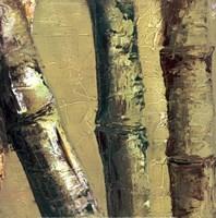 """Bamboo Columbia IV by Tita Quintero - 12"""" x 12"""", FulcrumGallery.com brand"""
