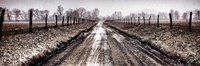 "Picket Path by Todd Ridge - 36"" x 12"""