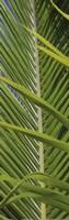 Palm Collection V Fine Art Print