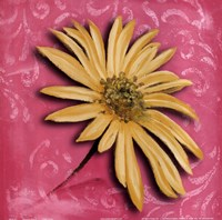 Blooming Daisy II Fine Art Print
