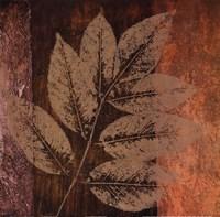 Summer Leaf II Framed Print