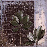Botanica on Blue II Framed Print