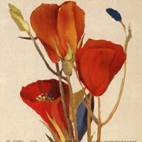 Red Grandiflorum II (close up) Framed Print