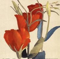 "Red Grandiflorum by Lanie Loreth - 12"" x 12"""