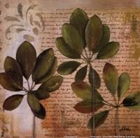 Botanica I Framed Print