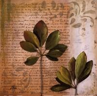 Botanica II Framed Print