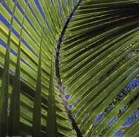 Palm Collection III Fine Art Print