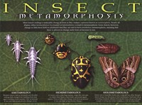 "Insect Metamorphosis - 24"" x 18"""