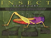 Insect Structure Wall Poster
