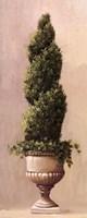 Roman Topiary llI Fine Art Print