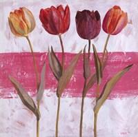 Tulipe sur Rose Fine Art Print