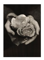 "Two Roses by Tessa Traeger - 20"" x 28"""