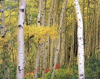 Aspen Abstract Journal Fine Art Print