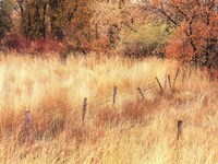 Autumn Pasture Fine Art Print