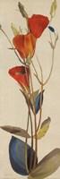 Red Grandiflorum II Framed Print