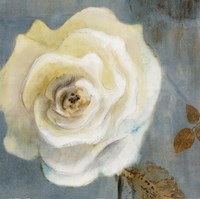 """24"""" x 24"""" White Rose Pictures"""