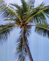 "Palm on Blue by Karol King - 16"" x 20"""