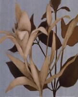 """Foliage on Teal II by Lanie Loreth - 16"""" x 20"""""""